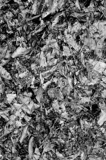 monochrome leaves