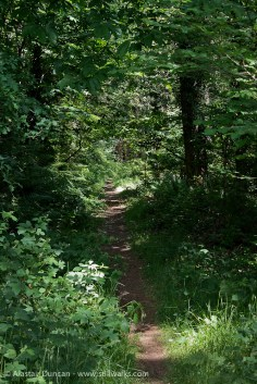 Advancing forest footpath