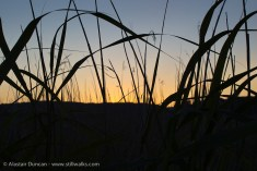 Marsh grass and sunset