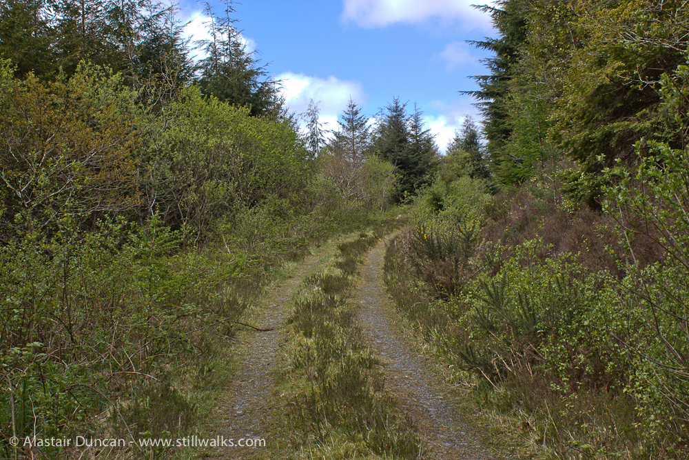 Carmarthenshire forestry track