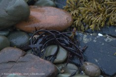 seaweed and stone