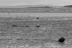 monochrome buoys perspective