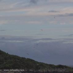 sea gulls enjoying the wind