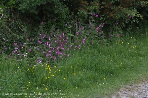 Trackside wildflowers