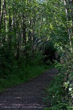 leafy passageway
