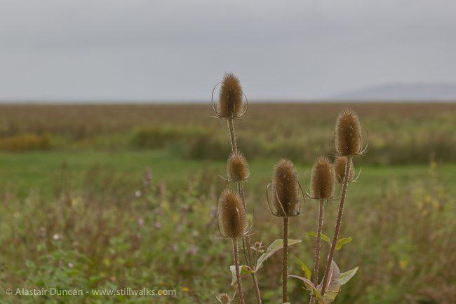 Llanrhidian Marshes