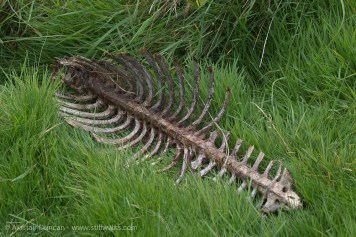 rib cage and vertebrae
