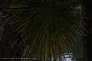 Dark Park 22 - palm fronds