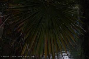 Dark Park 22 - palm fronds