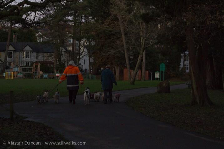 Dark Park 25 - dog walking