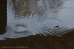 expanding ripples