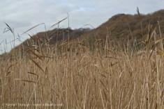 Fen grasses