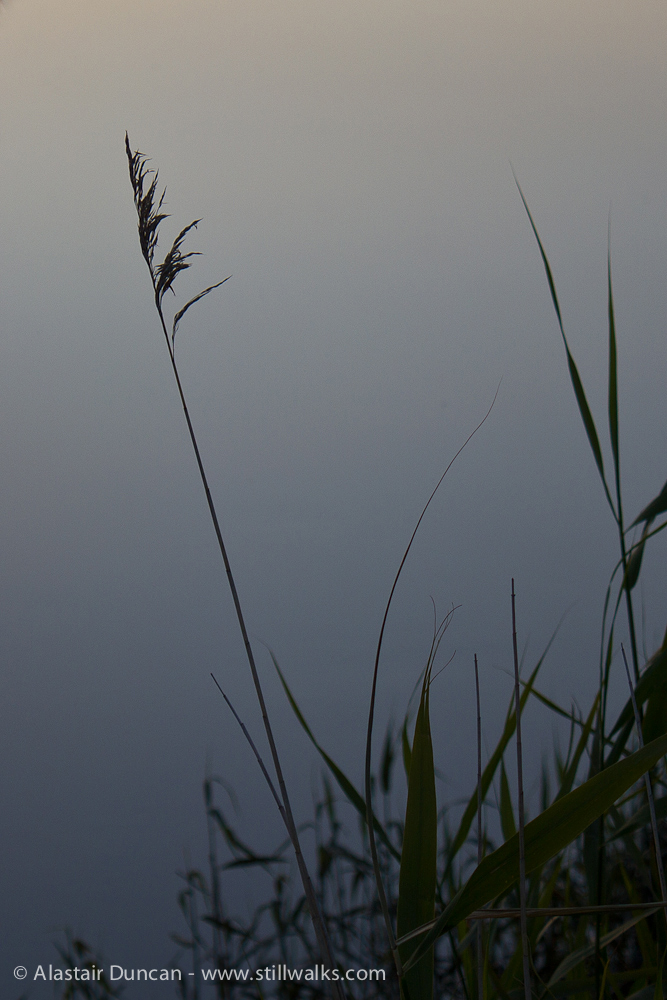 June - Marshes 1
