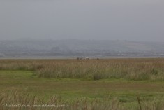 October - Llanrhidian Marshes