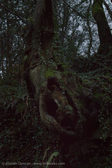 Tree Ghoul in the Gloom
