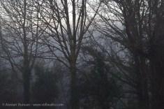 Hazy woods