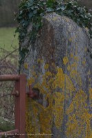 gatepost and lichen