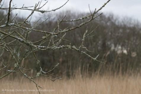 Branch and Lichen