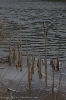 punctuated by reeds