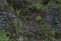 Ferns in Copperopolis