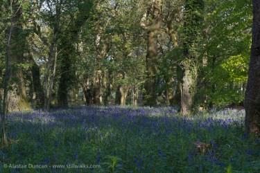 woodland colour