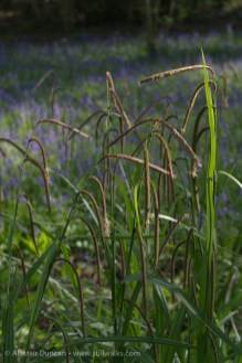 grass seed foreground