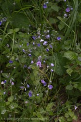 lane-side wildflowers