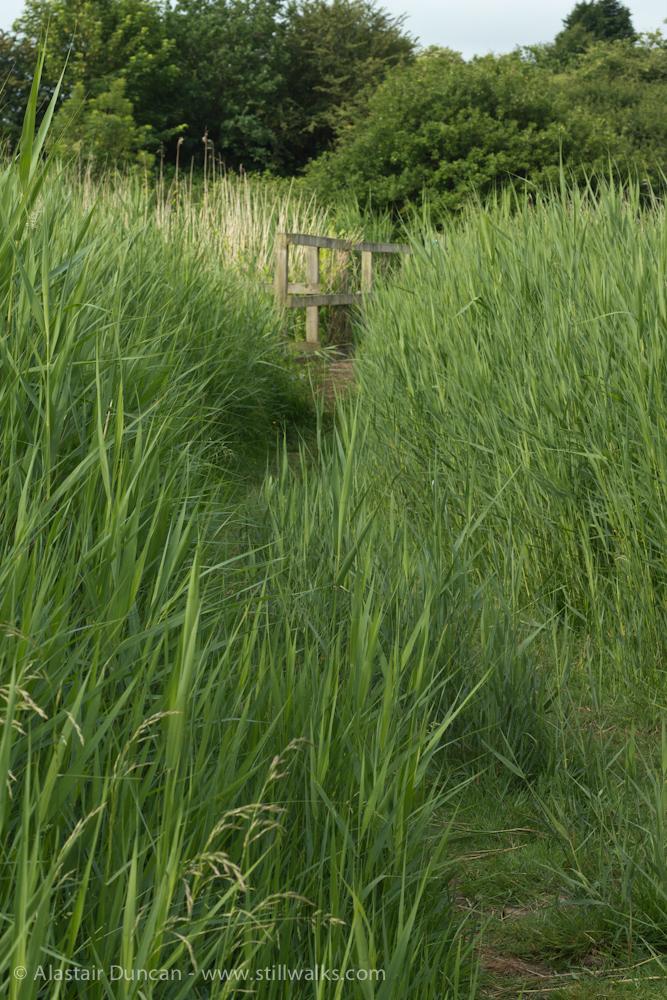 deep marsh footpath