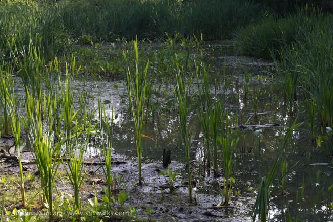 empty pond