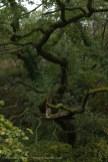 Goppa Hill-24