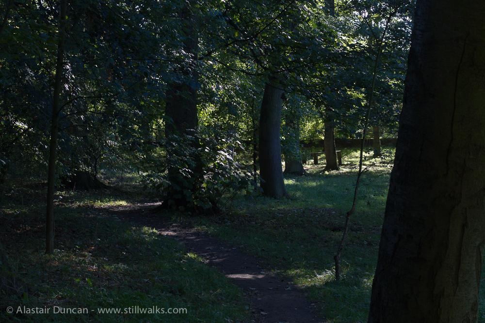 shady woodland