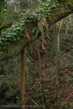 Dantwyn Quarry-9