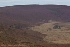 Pattern in the landscape