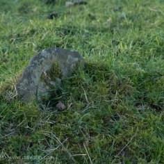 Marshes Churchyard-20