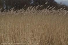 dancing marsh grass