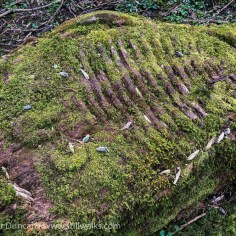 Mossy fossil art