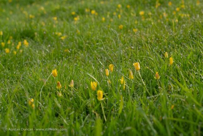 yellow in green