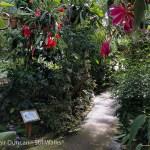 botanic hothouse