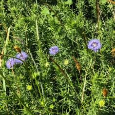 wildflowers 7b