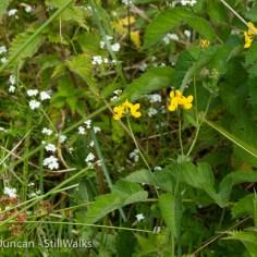 waterside wildflowers