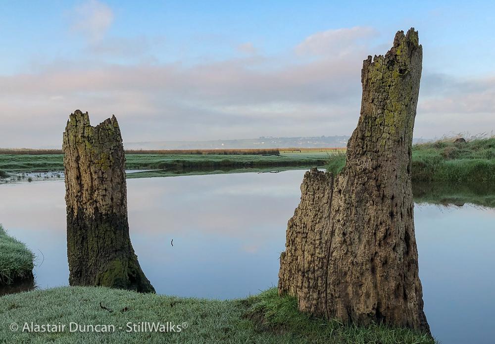 tree stump perspective