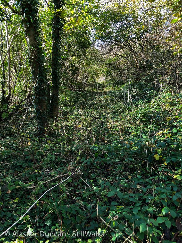 Coedbach Woods-8