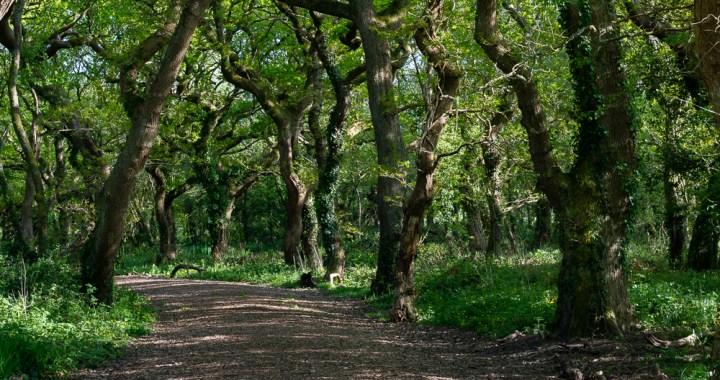 oakwood 2
