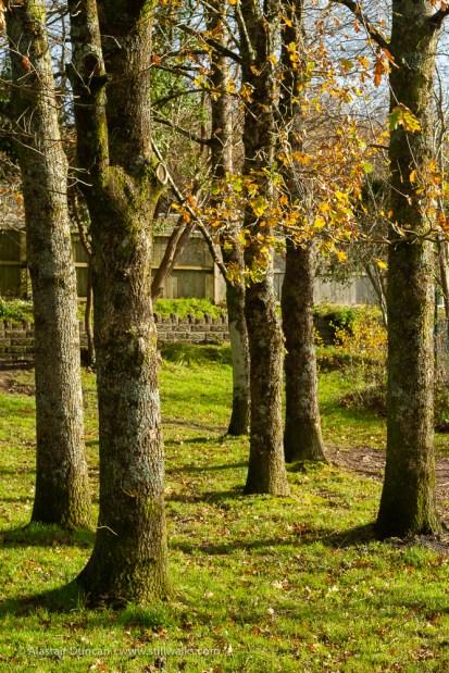 trees in sunlight