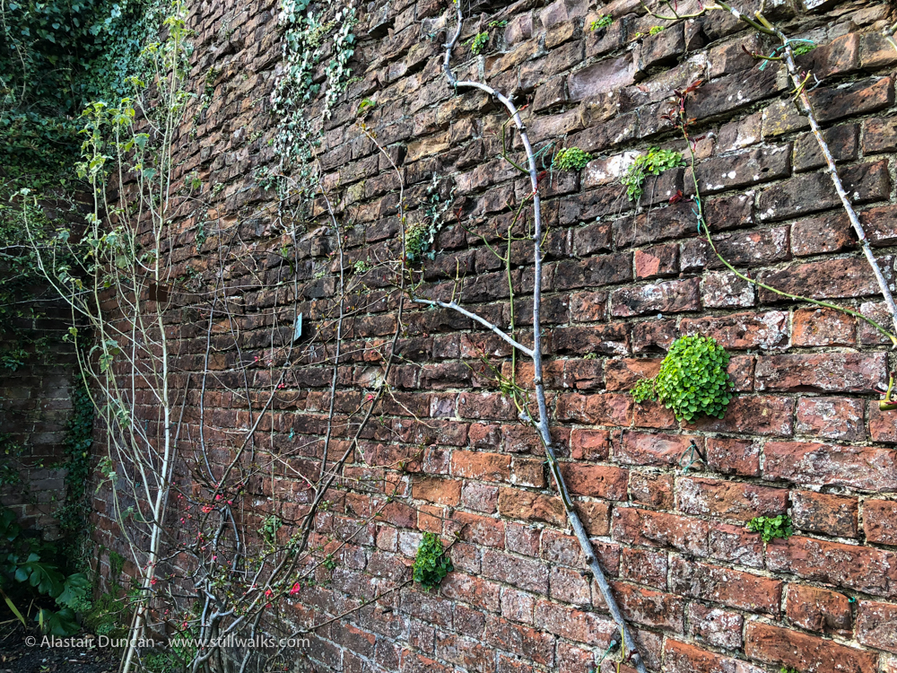walled garden wall