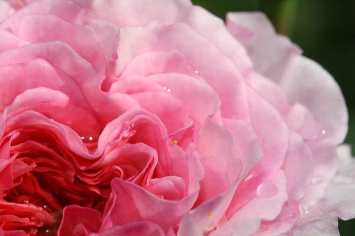 Аромат - Роза