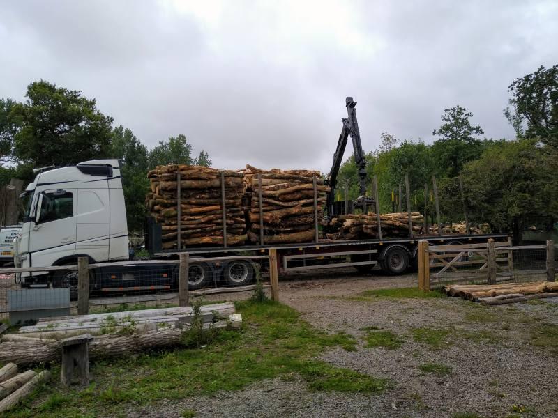 Lower Wood