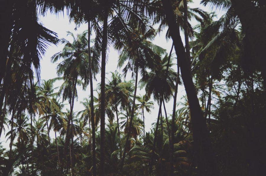 Hva er egentlig problemet med palmeolje?