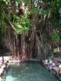 Centuries-Old Balete Tree