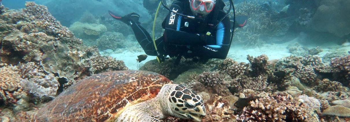 Stingray Divers - Sabang, Philippinen, Taucher mit Schildkröte